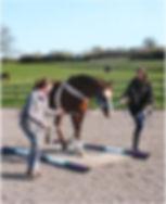 Horse wrap walk.jpg