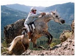horse on mountain.jpg