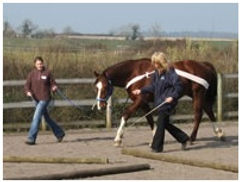 horse groundwork.jpg