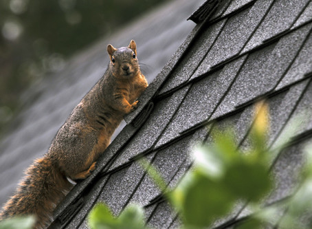 What to Do if an Animal Is Stuck in Your Chimney