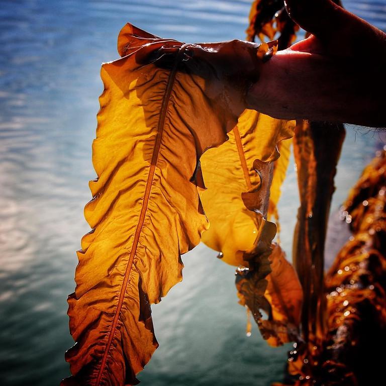 Les algues : culture, cuisine et tendances