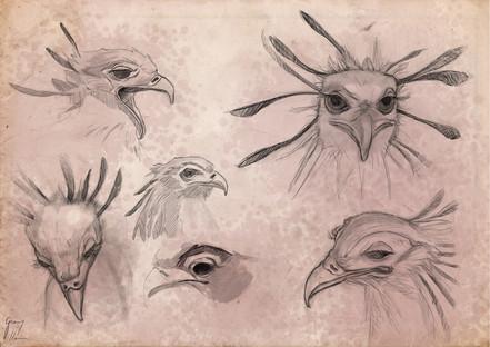 Estudio de pájaro secretario