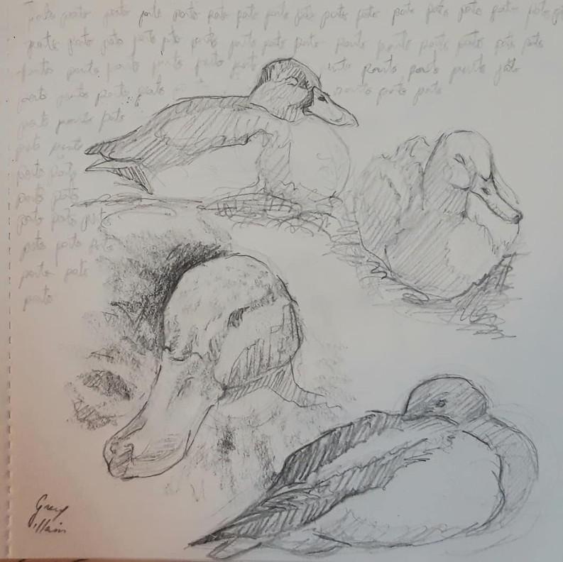 Estudio de patos II
