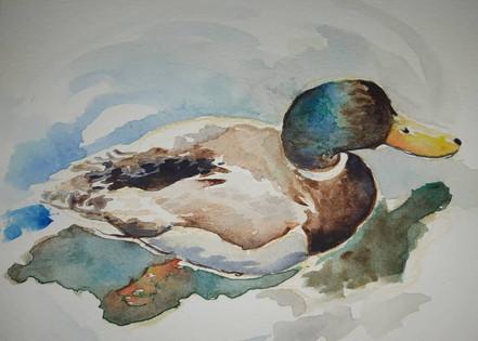 Pato I a color