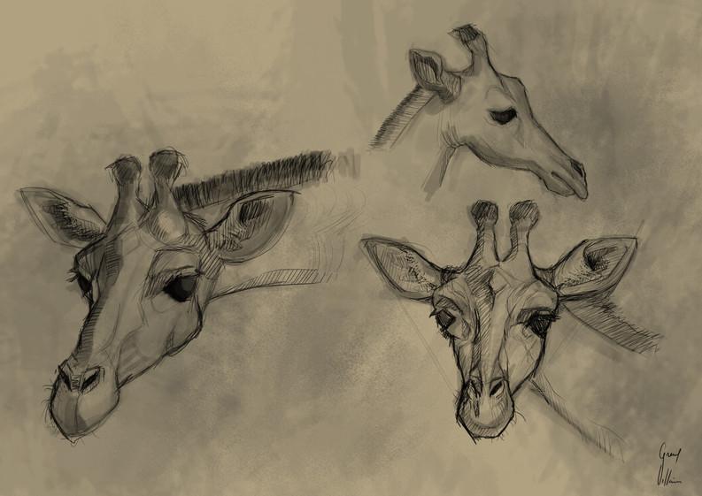 Estudio de jirafas
