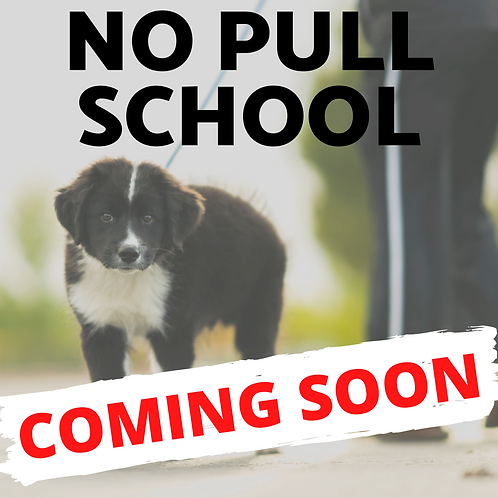 No Pull School