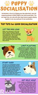 Top Tips : Puppy Socialisation
