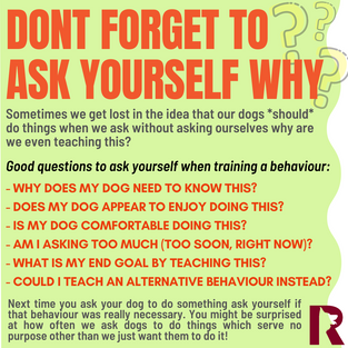 Don't Forget to Ask Yourself Why