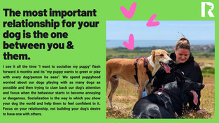 Your Dog's Most Important Relationship