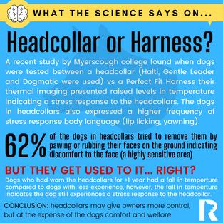 Headcollar or Harness