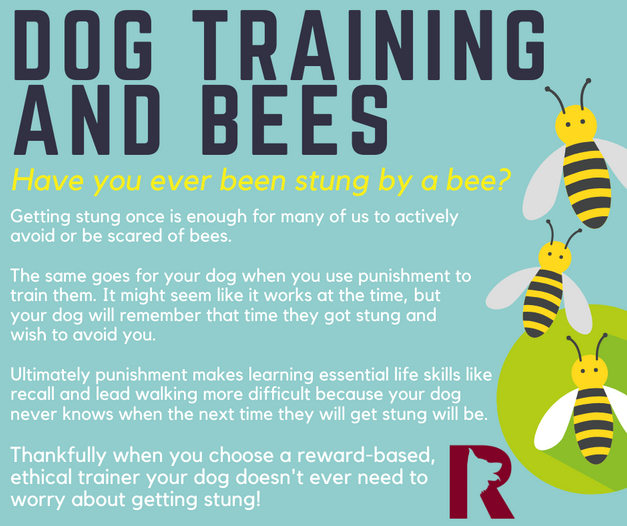 Don't Get Stung by Bad Training