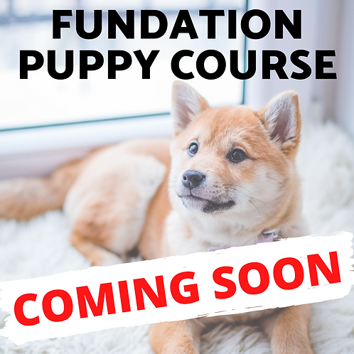 FUNdation Puppy Course