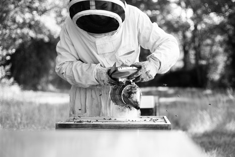Le rucher de Gambais
