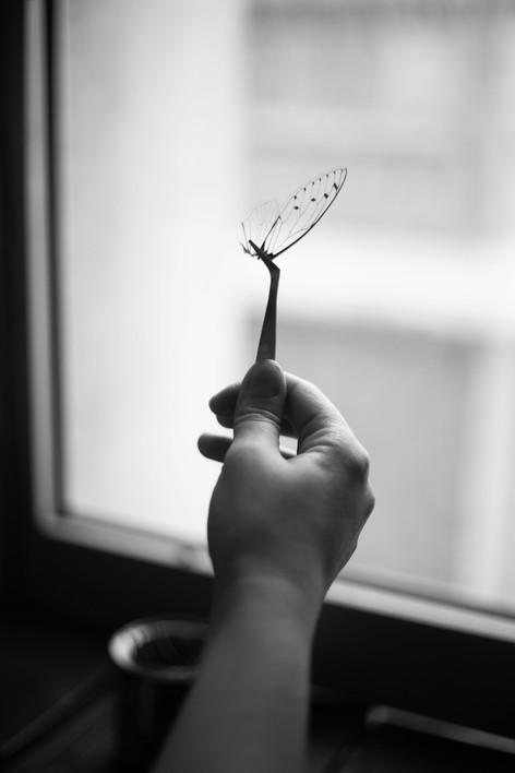 Victorian Rehab Photo : Marion Saupin