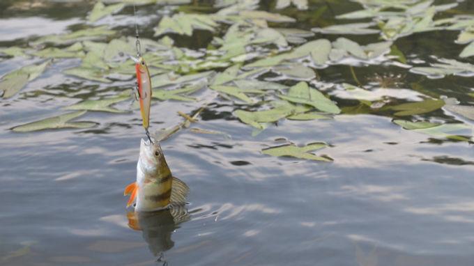 Заборонять вилов риби на зимувальних ямах