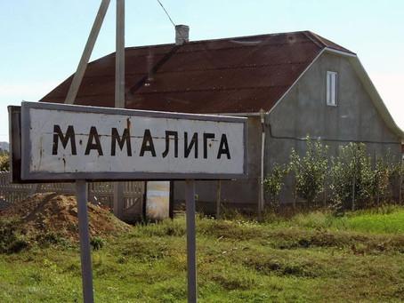 Оголошено результати виборів до Мамалигівської ради та голови