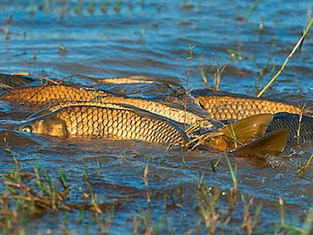 Від сьогодні заборонено вилов риби - нерест