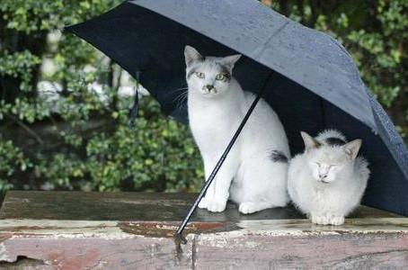 На вихідні - тепло і зливи