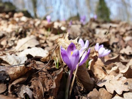 Вихідні дні будуть весняними по-справжньому