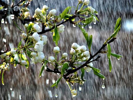 Дощі не припиняться
