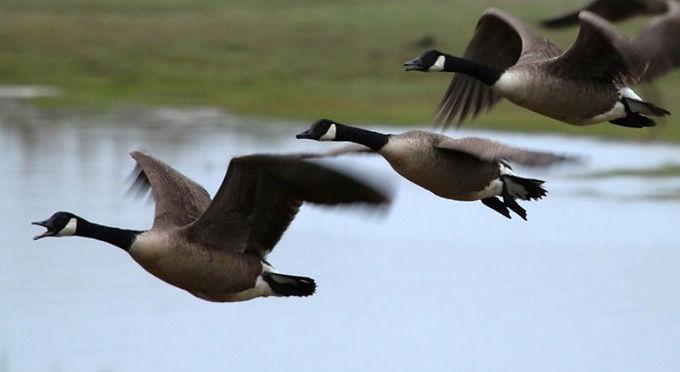 Сезон полювання на Новоселиччині розпочнеться 10-го серпня