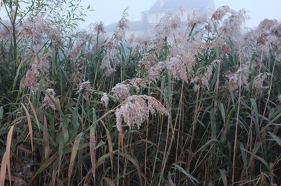 В Укргідрометцентрі прогнозують теплий листопад