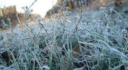 Синоптики прогнозують перші заморозки