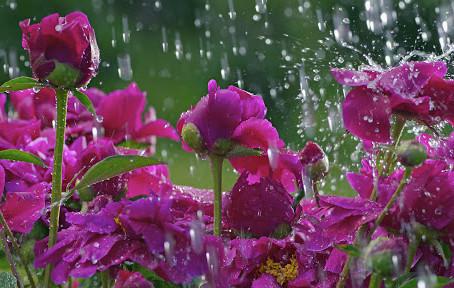 На вихідні знов похолодає і дощитиме