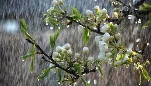 Збережеться прохолодна погода з грозами