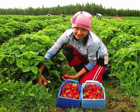 Українських заробітчан попереджають про небезпеки у разі нових COVID-обмежень у Європі