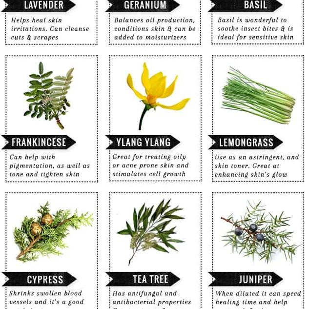 guide-to-oils1.jpg