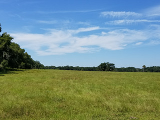 For Sale!  308 Acres