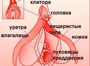 Клитор: покрытая тайной зона удовольствия и источник женского оргазма