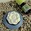 Thumbnail: Diffuseur d'arôme: pierre aromatique fleur de Lotus