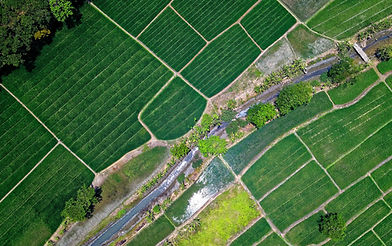 Farming Image.jpg