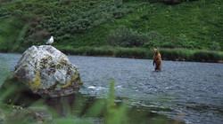 L'Ours et le Goéland.