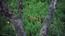 Cette mère a deux oursons qu'elle doit protéger.