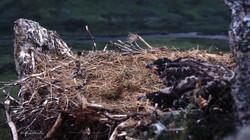Le nid d'aigle