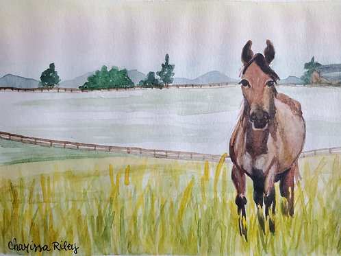 """""""Sunrise Stroll"""" -5x7 Watercolor of a Kentucky horse in the Bluegrass"""