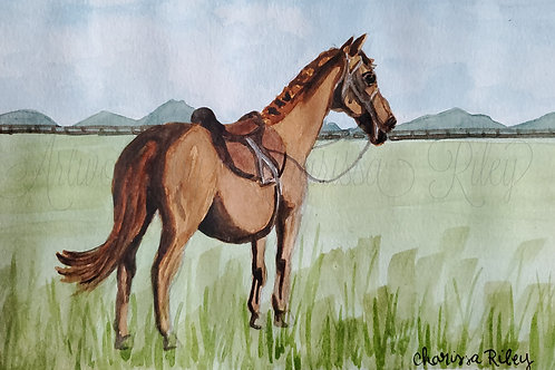 """""""All Saddled Up With Nowhere To Be"""" - 5x7 Watercolor of a Kentucky horse"""