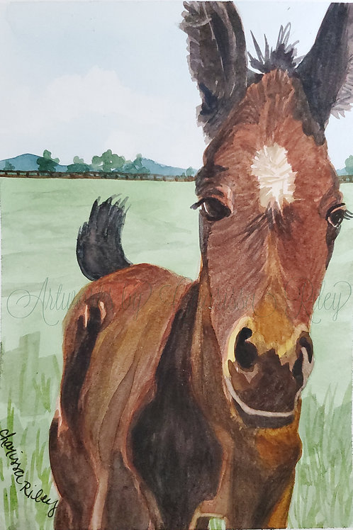 """""""Cute Colt"""" -5x7 Watercolor of a Kentucky horse in the Bluegrass"""