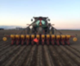 Fodder Beet Drilling.jpeg
