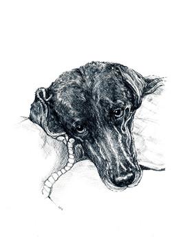 Suzie- black labrador pet portrait-Penci