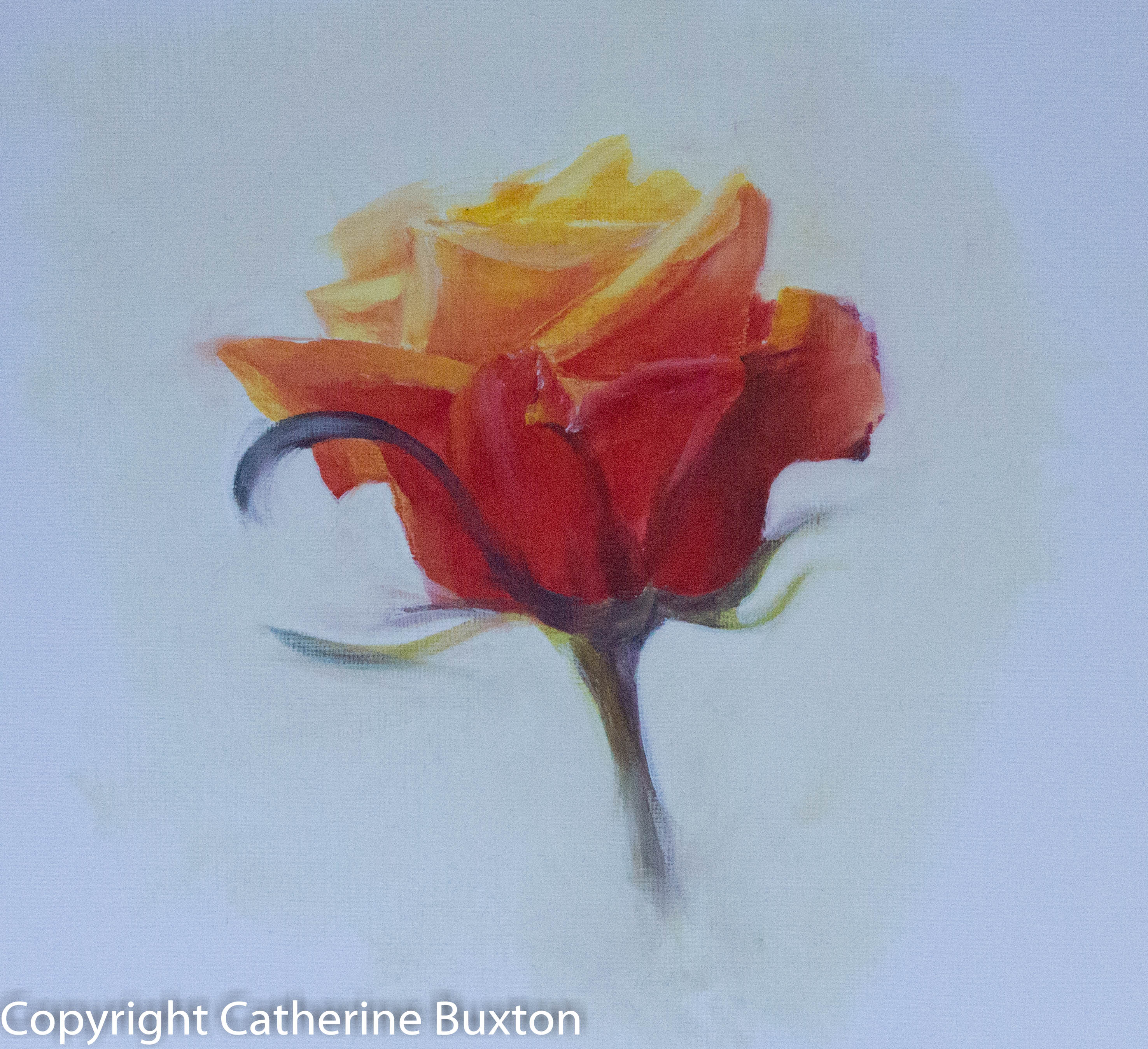 Yellow Rose, Oil, 20x20cm, 2016, by Cat