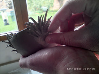 Katherine Fortnum creating a Ceramics sculpture in her workshop, Market Harborough, Leicestershire
