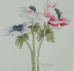 Three Anemones