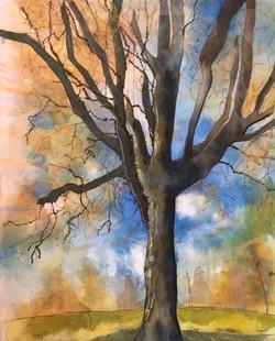 'Tall Tree'