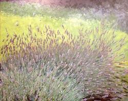 V Large Lavender