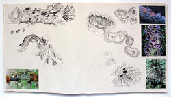 Katherine Fortnum Ceramics - Sketchbook pages (8)