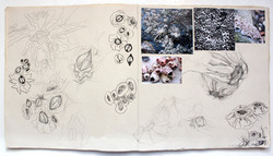 Katherine Fortnum Ceramics - Sketchbook pages (5)